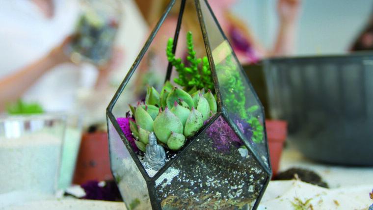 Succulent in terrarium.